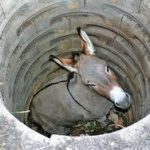 The Donkey in a Well: When Life Shovels Dirt on You, Shake it Off.