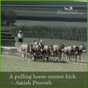 amish-proverb-A-pulling-horse-cannot-kick